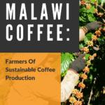 Malawi Coffee