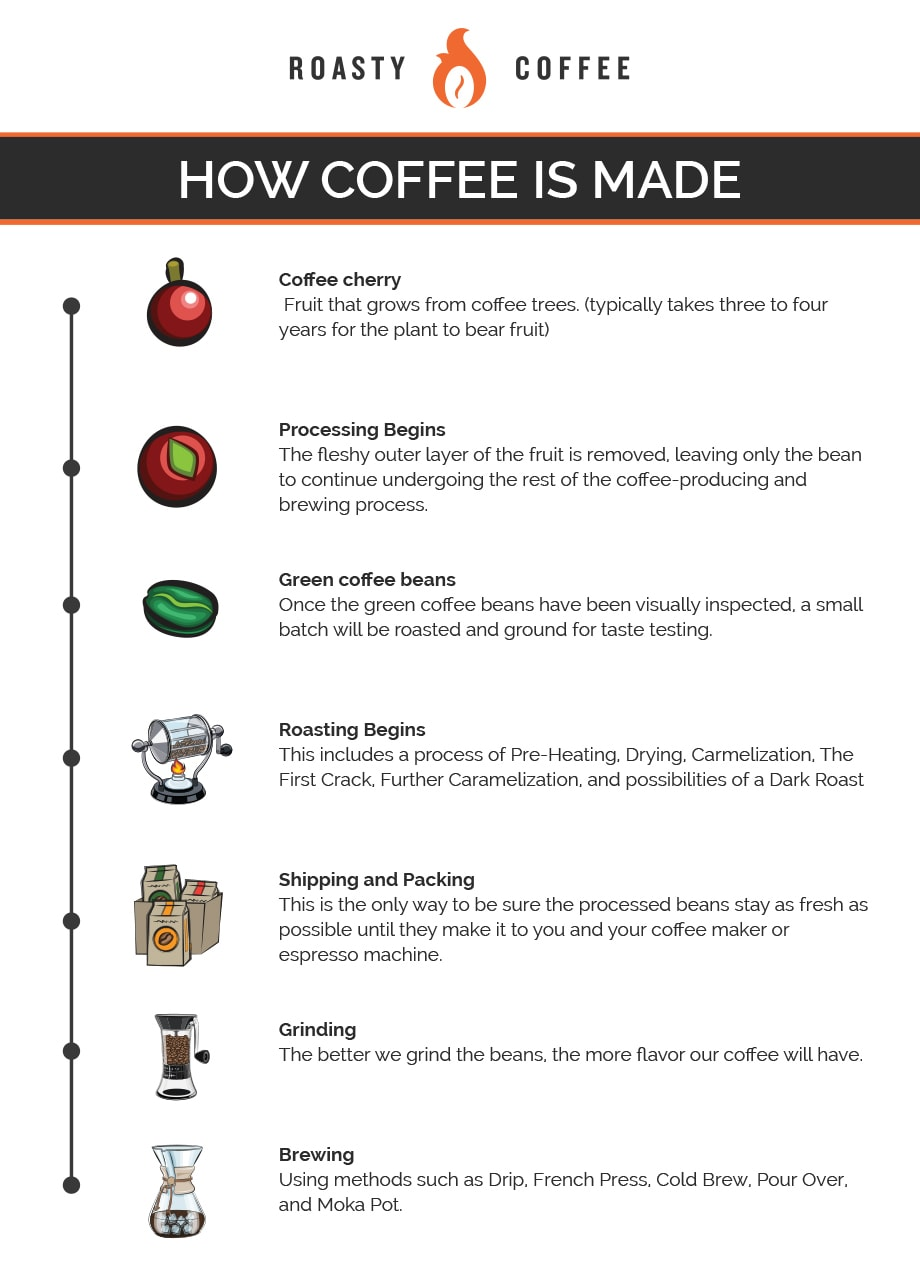 How Coffee Is Made Infographic