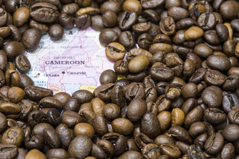 Cameroon Coffee: Geographical Diversity Makes For Perfect Coffee