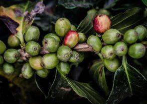 rwanda coffee