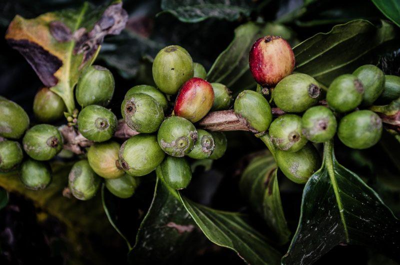 Rwanda Coffee: World's Most Under-Appreciated Coffee?