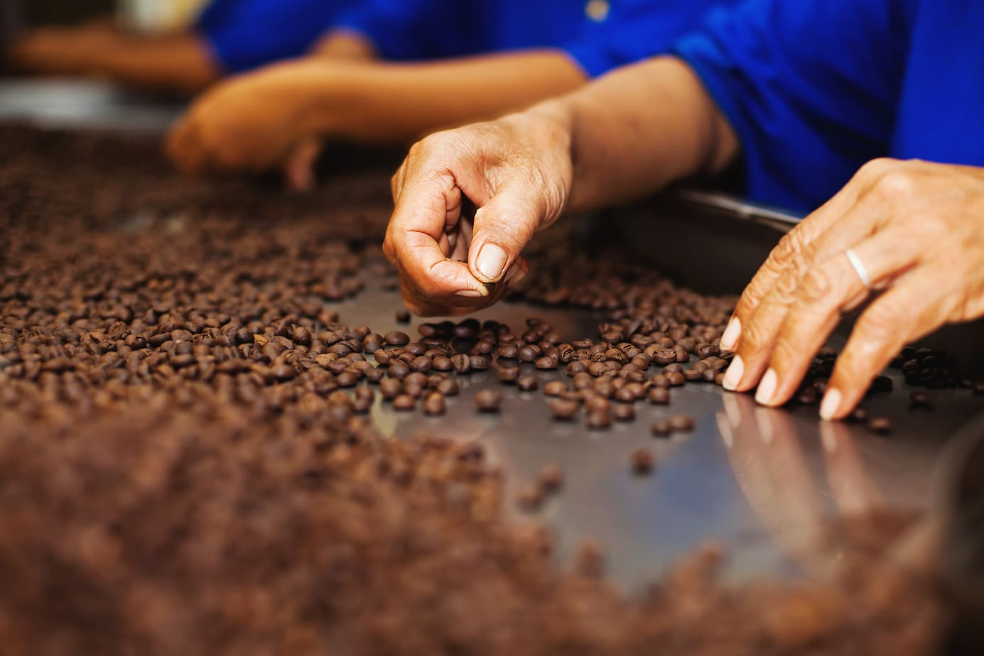 Geisha Coffee: The Symbol of Perfection