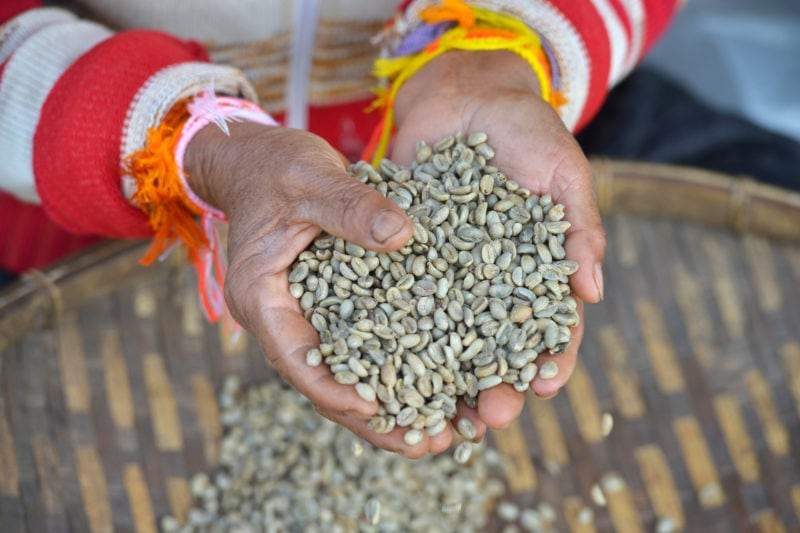 Laos Coffee: Bolaven Plateau Coffee Plantation