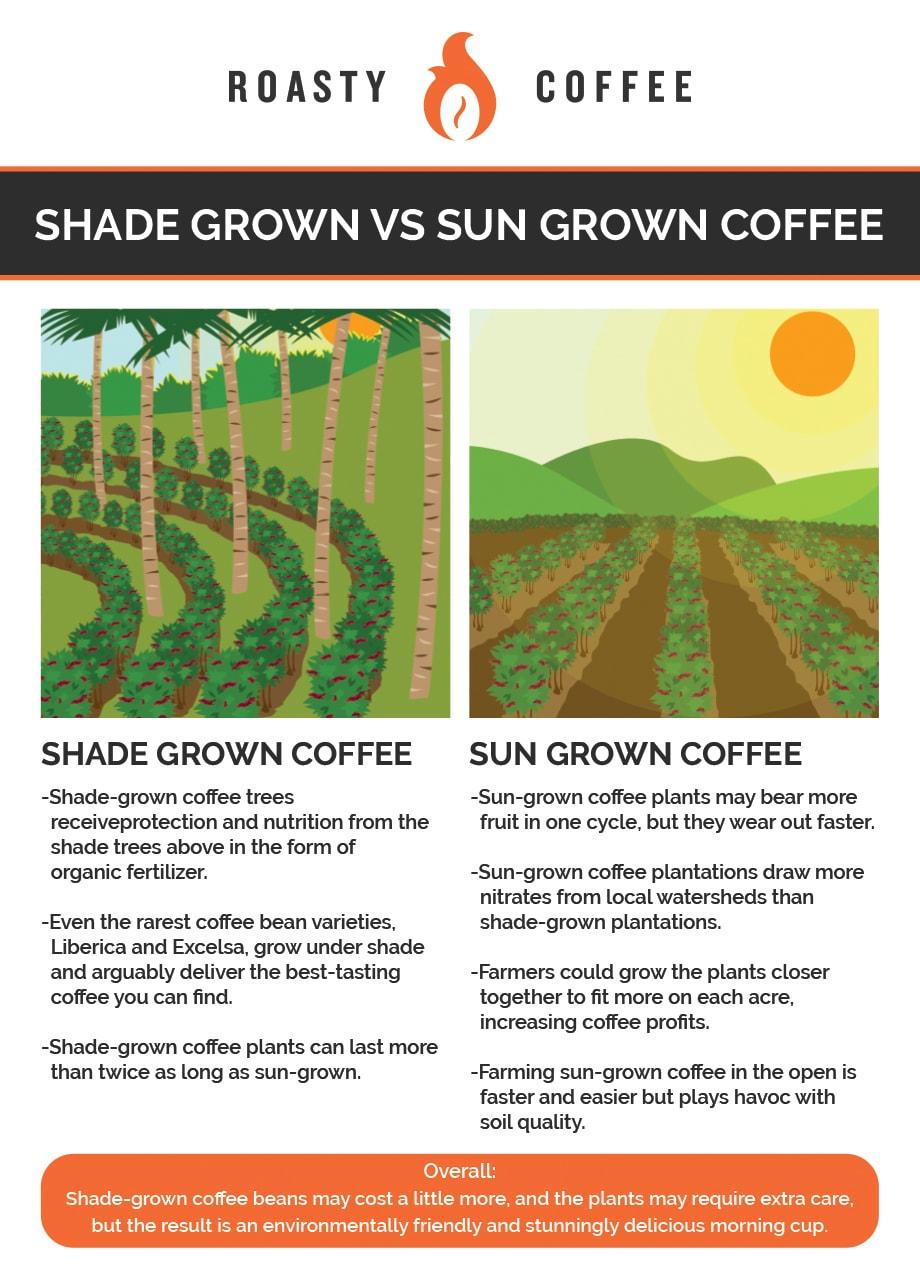 shade grown coffee vs sun grown Infographic