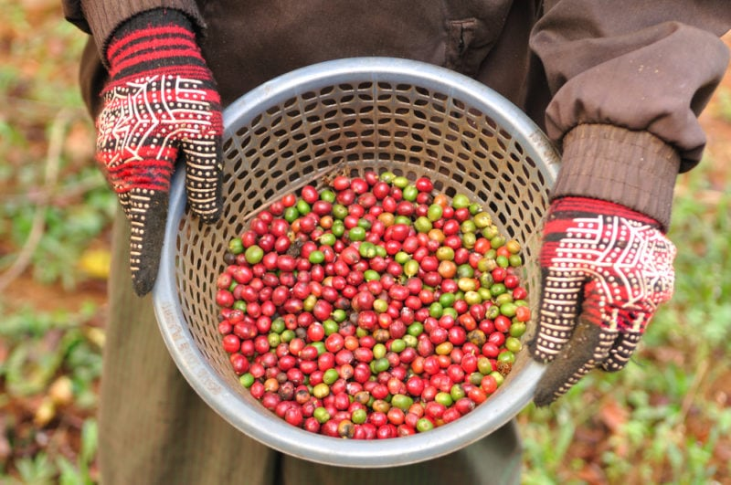 Organic Coffee: A Guide to Buying Better Beans